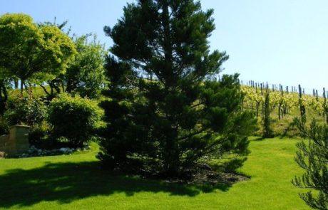 GaLaBau-Lorch | Referenzen - Großbaumverpflanzung 1