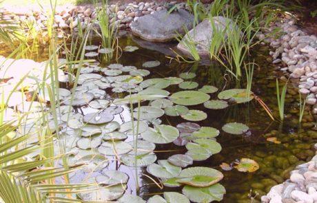GaLaBau-Lorch | Referenzen - Teich 4